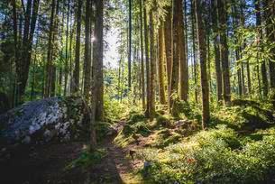 Zauberwald, Ramsau, Berchtesgaden National Parkの写真素材 [FYI02343472]