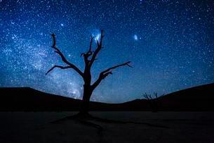 Dead tree in front of starry sky with Milky Way, Deadvleiの写真素材 [FYI02343497]