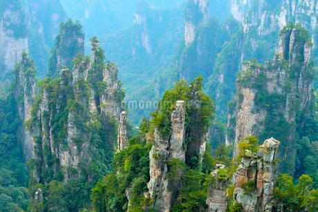 Tianzishan mountain with vertical rock columns of quartzの写真素材 [FYI02343508]