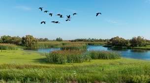 Flying Glossy ibises (Plegadis falcinellus), Marshesの写真素材 [FYI02343534]