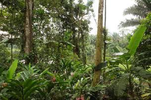 Jungle on the Rio Indio, San Juan de Nicaragua or San Juanの写真素材 [FYI02343574]