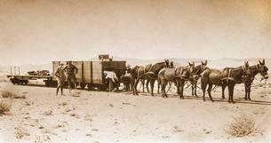Material transport in 1915, donkey pull freight carの写真素材 [FYI02343590]