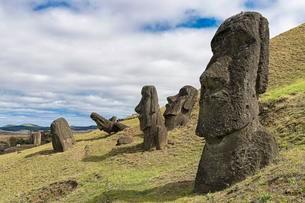 Moais in Rano Raraku, Rapa Nui National Park, Easterの写真素材 [FYI02343591]