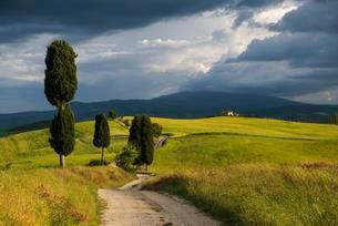 Landscape with rural road, near Pienza, Val d'Orciaの写真素材 [FYI02343613]