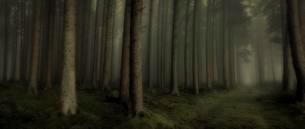 Dark fog, spruce forest, Unterallgau, Bavaria, Germanyの写真素材 [FYI02343615]