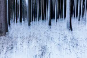 Blurred winter forest, Unterallgau, Bavariaの写真素材 [FYI02343648]
