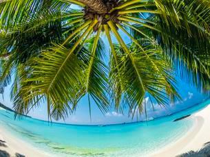 palm tree at the sandy beach, Fisheye, Rsadhoo Atollの写真素材 [FYI02343725]