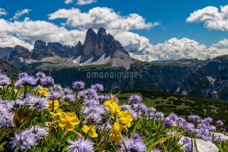 Flower meadow in front of mountain panorama, Globulariaの写真素材 [FYI02343729]