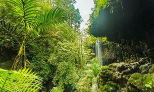 Waterfall in canyon, jungle, Kalianyar, Sempol, Easternの写真素材 [FYI02343806]