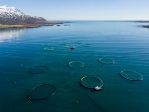 Aerial view, fish farming in large free-water nets in theの写真素材 [FYI02343823]