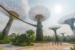 SuperTrees, Gardens by the Bay, Singapore, Asiaの写真素材 [FYI02343835]