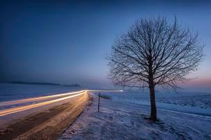 Winter landscape with bare tree, light trails of drivingの写真素材 [FYI02343837]