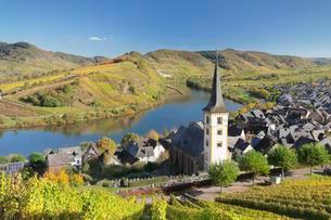 Vineyard at Moselleschleife near Bremm, Bremmer Calmontの写真素材 [FYI02343893]