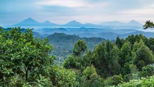 Tropical rainforest, Central African hills, Virungaの写真素材 [FYI02343938]