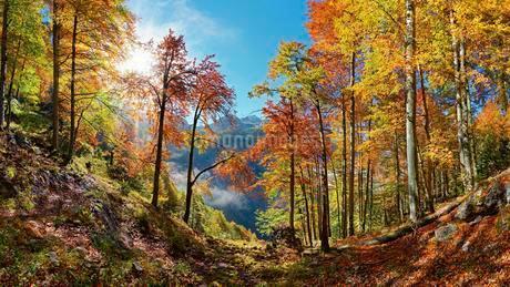Bright mountain forest in autumn, Landtalgrabenの写真素材 [FYI02343945]