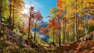 Bright mountain forest in autumn, Landtalgrabenの写真素材 [FYI02343945]