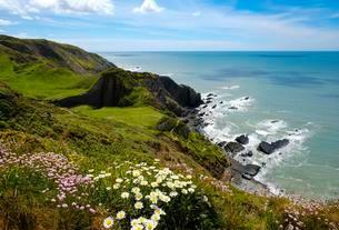 Steep coast, Hartland Quay, Hartland, Devon, England, Greatの写真素材 [FYI02343962]