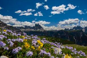 Flower meadow in front of mountain panorama, Globulariaの写真素材 [FYI02343968]