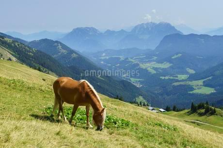 Horse, Haflinger, at the Hinteres Sonnwendjoch over theの写真素材 [FYI02344004]