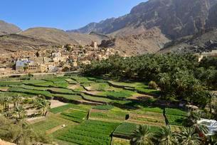 Village of Balad Sayt, Hajar al Gharbi mountainsの写真素材 [FYI02344044]