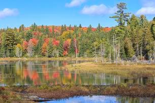 Pond in autumn, autumn colouring, Algonquin Provincialの写真素材 [FYI02344072]