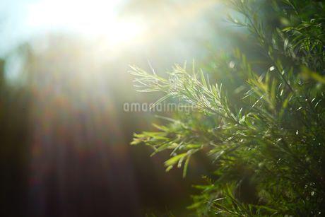 Sunshine upon treesの写真素材 [FYI02344123]