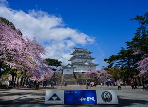 満開の桜咲く小田原城の写真素材 [FYI02344165]