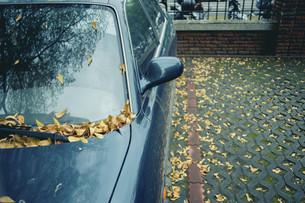 Fallen leavesの写真素材 [FYI02344255]