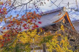 Maple season in Jojakko-ji Templeの写真素材 [FYI02344265]