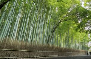 Bamboo forest in the Arashiyamaの写真素材 [FYI02344290]