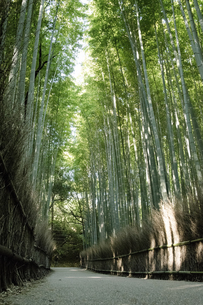 Bamboo forest and the path in the Arashiyamaの写真素材 [FYI02344295]