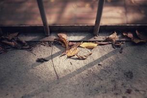 Dried leafの写真素材 [FYI02344353]