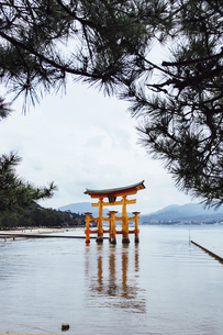 The floating Torii gate in Itsukushima Shrine; Japanの写真素材 [FYI02344367]