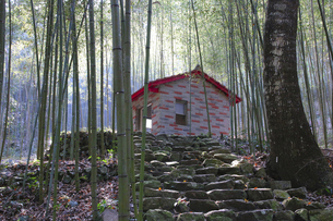 house in the bamboo forestの写真素材 [FYI02344452]
