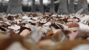 Fallen leavesの写真素材 [FYI02344684]