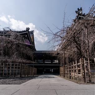 Bukkoji Buddhist Temple;Kyotoの写真素材 [FYI02344710]