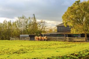 Farm; Kinderdijk; Nederlandの写真素材 [FYI02344767]