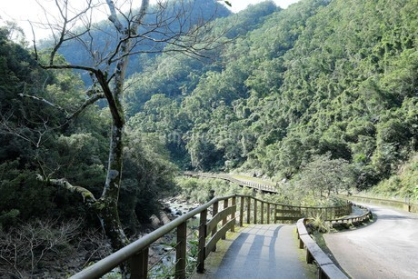 Stream Fish and Fern Trail;Jingualiaoの写真素材 [FYI02344769]
