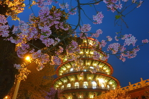 Cherry blossom at the night; Tien-Yuan Templeの写真素材 [FYI02344772]