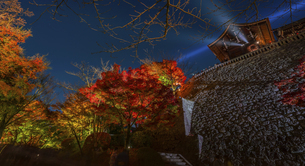 Low angle shot of the Maple Tree and the Kiyomizu-dera; Kyodoの写真素材 [FYI02344874]