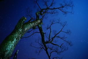 Tree against the starry nightの写真素材 [FYI02344916]
