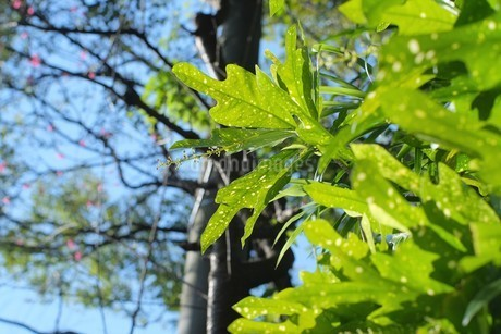 Closeup green leaf in the garden on blurred backgroundの写真素材 [FYI02344973]