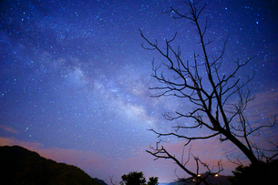 Branch of the Trees against the Starry Night. Jianshi; Hsinchu; Taiwanの写真素材 [FYI02345015]