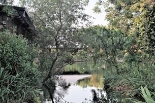Bade Pond Ecology Park;Taoyuanの写真素材 [FYI02345078]