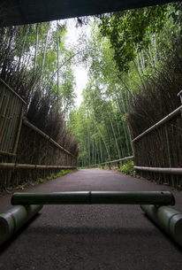 Bamboo forest and the path in the Arashiyamaの写真素材 [FYI02345143]