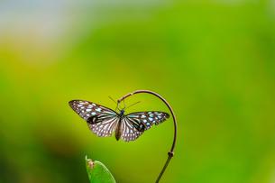 Butterfly;Taiwanの写真素材 [FYI02345349]