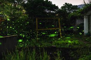 fireflies in the bushの写真素材 [FYI02345398]