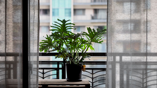 potted on the balconyの写真素材 [FYI02345532]