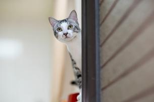 cat look at carema behind the cornerの写真素材 [FYI02345619]