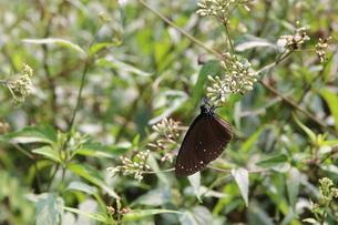 Butterflyの写真素材 [FYI02345681]